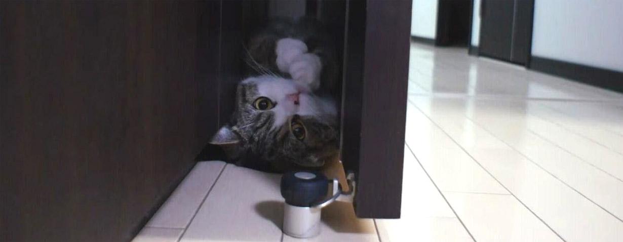 Katze Maru – Sie macht eine Vorwärtsrolle