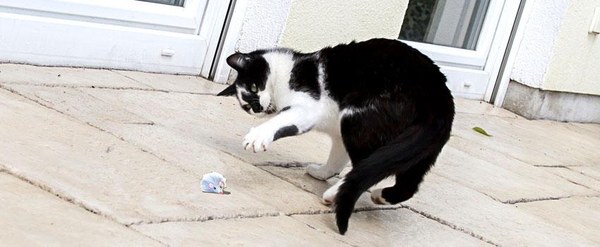 Kater Romeo spielt mit seiner Pluesch-Maus