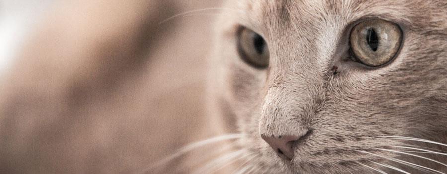 Biologische Katzenpflege hilft lästigen Katzengeruch entfernen
