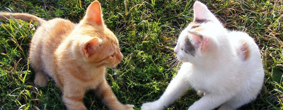 Pfotenstrecke: Die 10 schönsten Katzenpärchen