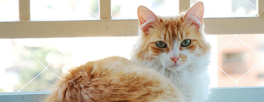 5 Tipps zur artgerechten Katzenhaltung