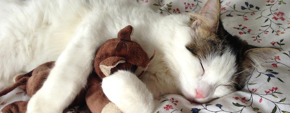 Der Umarme-deine-Katze-Tag