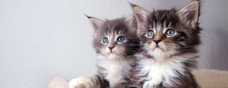 Pfotenstrecke: Die 10 süßesten Katzenkinder