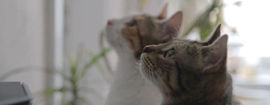 Gewinnspiel: Filme für Katzen – Das audiovisuelle Katzenspielzeug