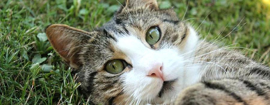 Gewinnspiel: Whiskers der Katzenmann