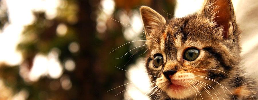 Gewinnspiel: 111 Gründe, Katzen zu lieben