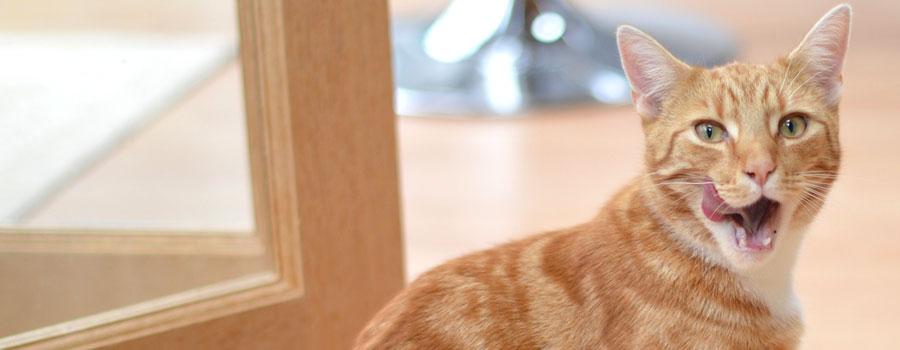 Gewinnspiel: Snacks for Cats - Blitzrezepte für Katzenleckerlis