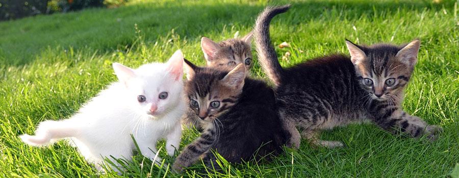 Gewinnspiel: Katzen Basics – Alles, was Katzenhalter wissen müssen