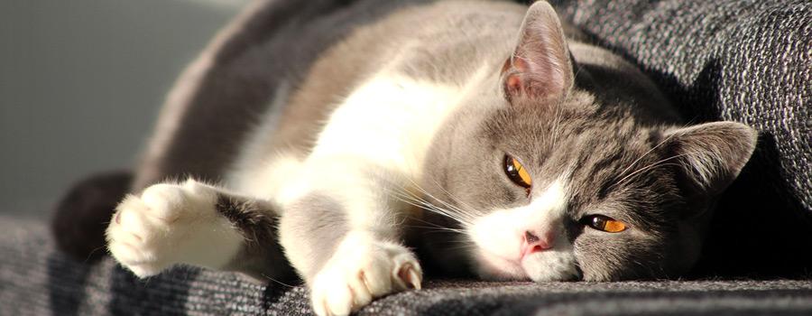 Gewinnspiel: Grumpy Cat: Nein! Weil Nein