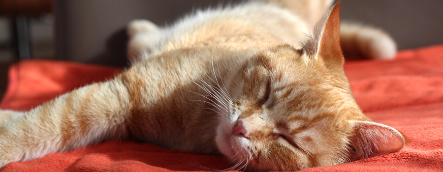 10 wichtige Sicherheitsmaßnahmen für ein katzensicheres Zuhause
