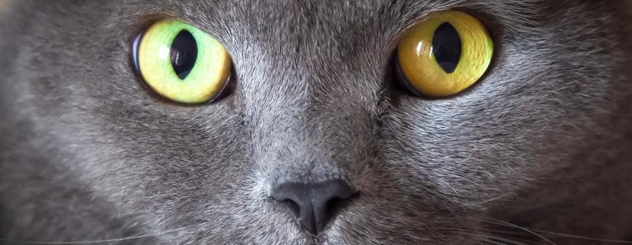 Gewinnspiel: Das Vermächtnis des Hypnotiseurs (Der 2. Coco-KatzenKrimi)