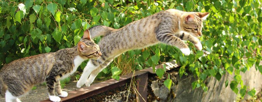 Die Katze – mehr als nur ein Haustier!