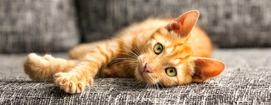 So starten Katzen gut ins neue Jahr & Gewinnspiel