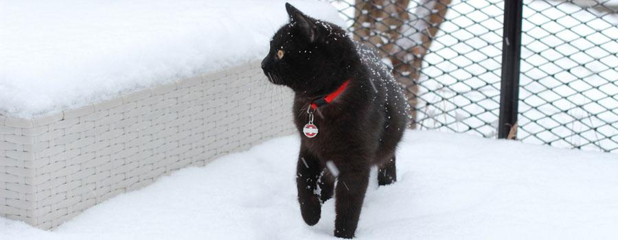 Katzen und das Mysterium Schnee