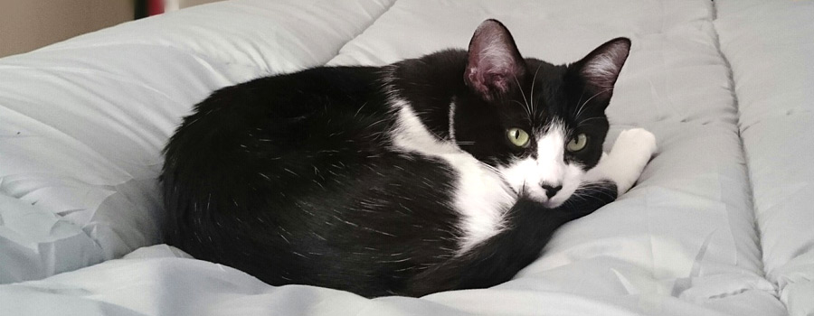 Alexandra Ein Doppelbett ist nicht groß genug für die Katze und mich Reinwarth