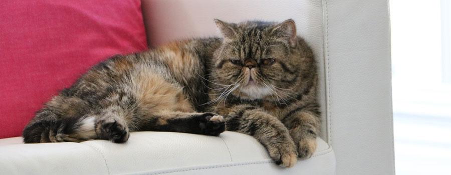 Haushaltstipps für Katzenbesitzer