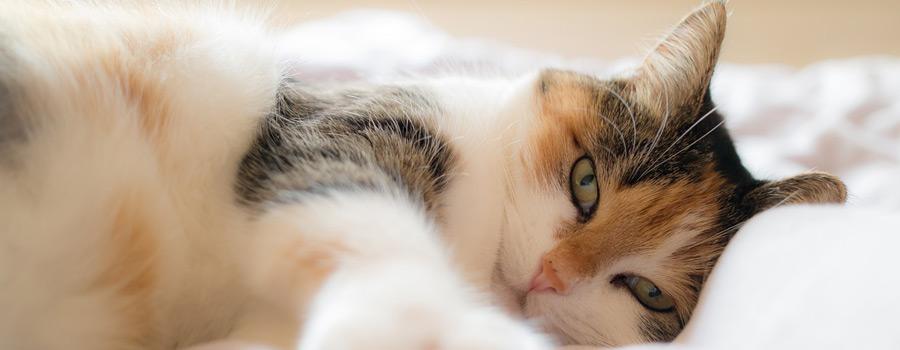 Pfotenstrecke: 10 Katzen im Bett