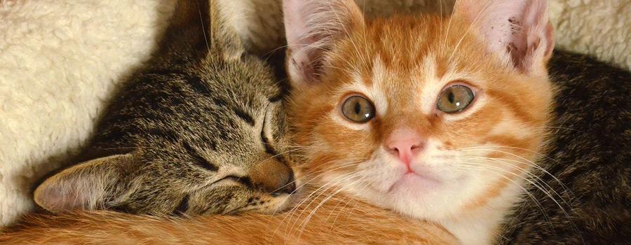 Am 8.8. ist Welt-Katzen-Tag – VIER PFOTEN weiß, was Katzen mögen