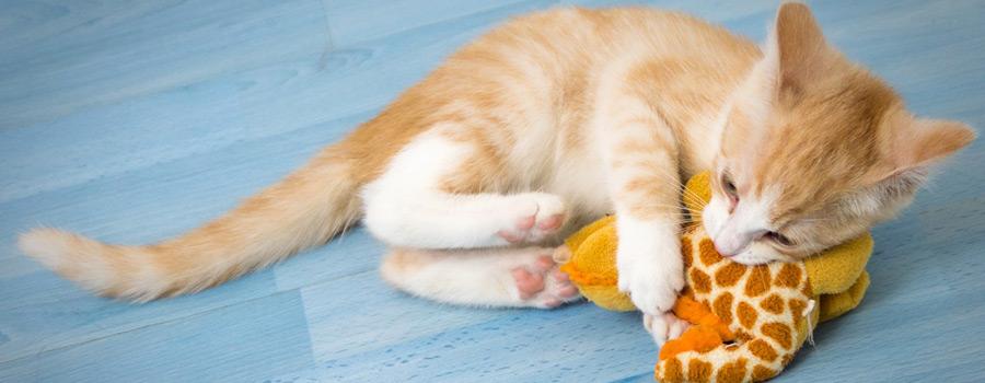 Gewinnspiel: Spielekiste für Katzen – 8 Spielzeuge – 50 Spielideen