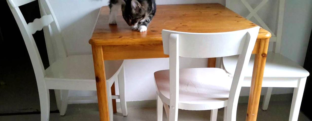 Katzen einfach Tricks beibringen: 10 Tipps zum erfolgreichen Clickertraining