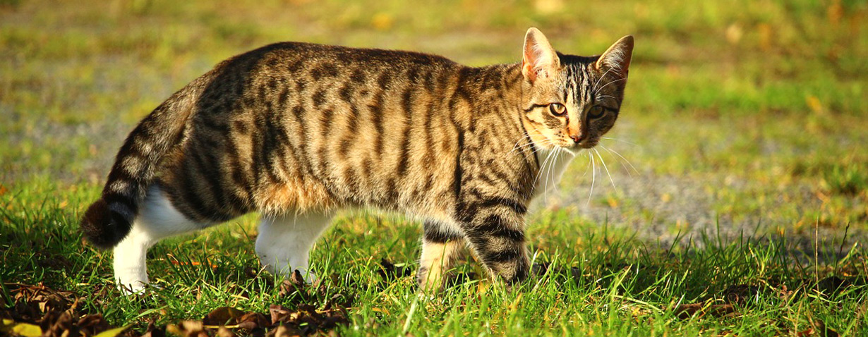 Pfotenstrecke: 10 getigerte Katzen