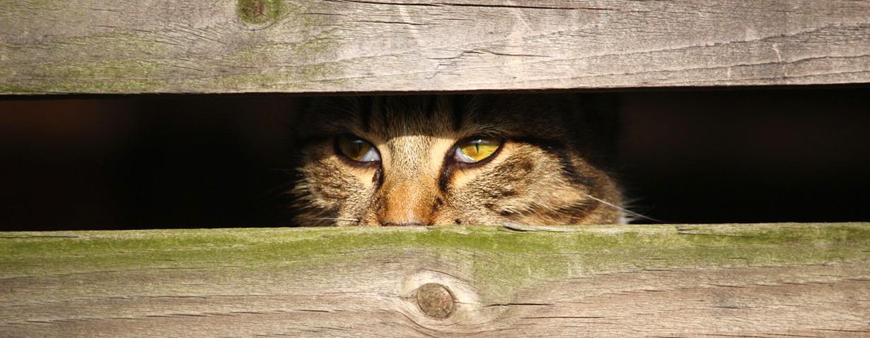 Pfotenstrecke: 10 Katzen in ihrem Versteck