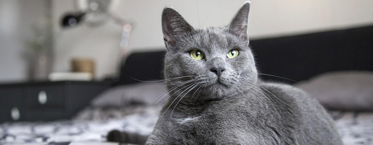 Pfotenstrecke: 10 Katzen, die auch am Tag grau sind