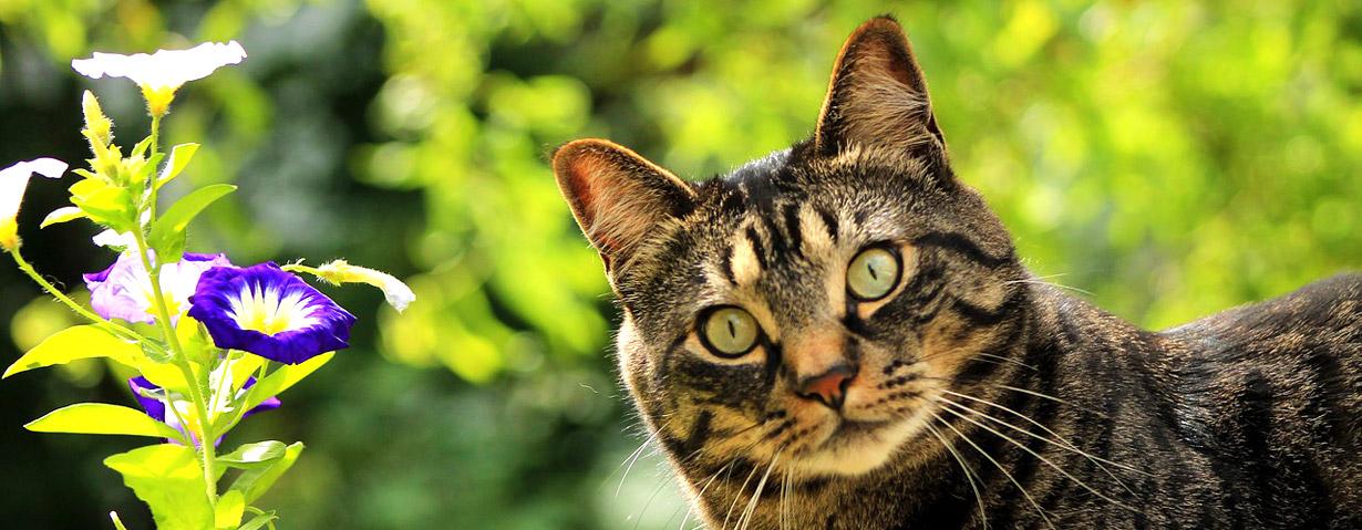 Pfotenstrecke: 10 Katzen, die den Frühling begrüßen