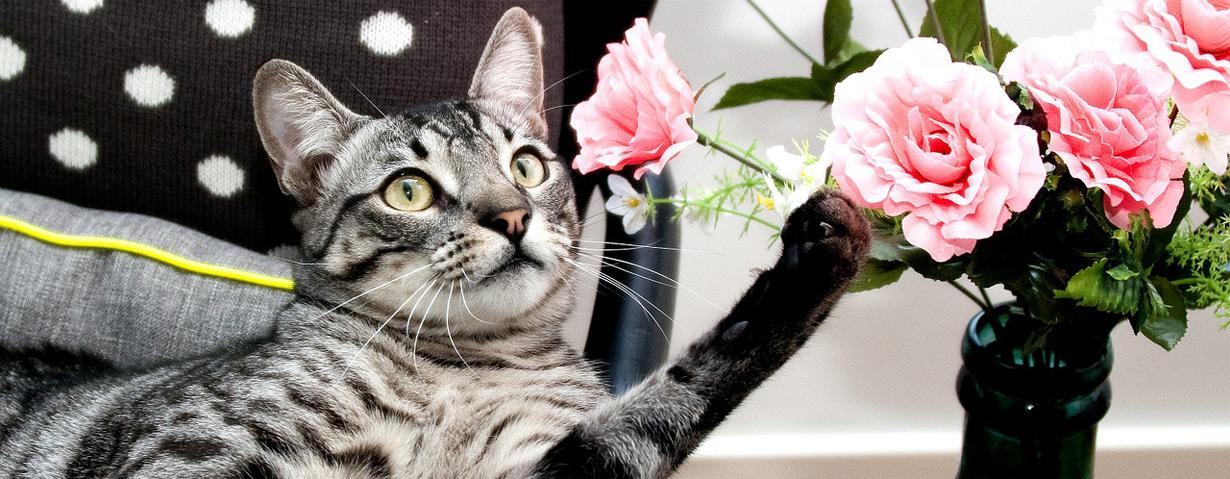Bunte Blumen: Schön, doch oft giftig!