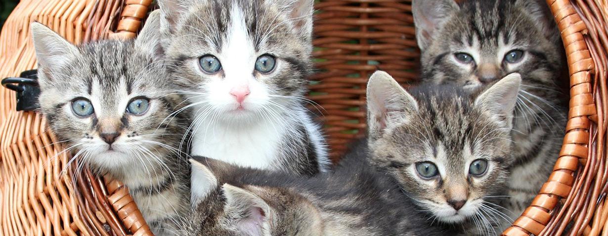 Pfotenstrecke: 10 Katzen im Korb