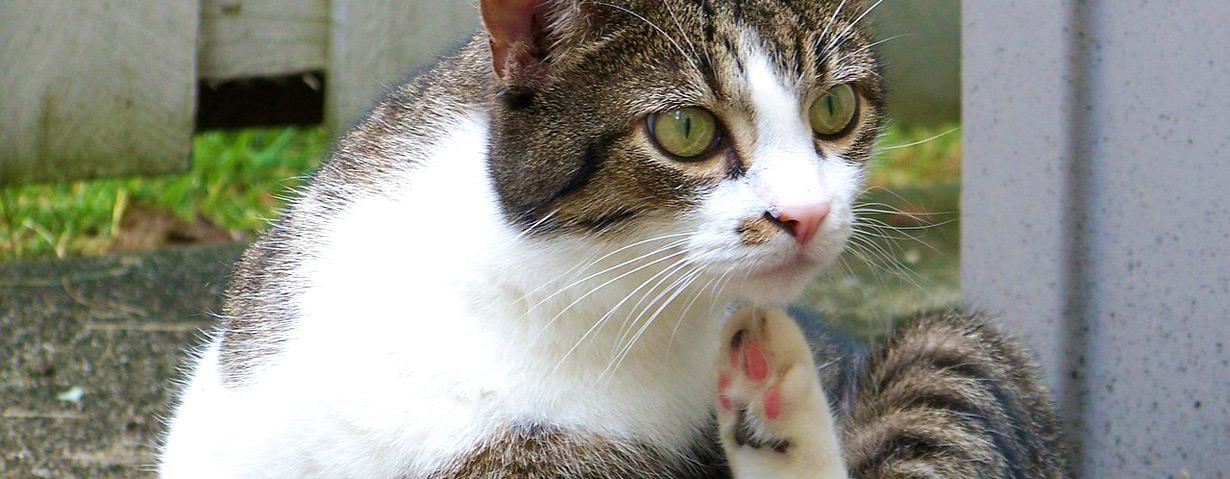 Nach Flohbefall Entwurmen Katzen De
