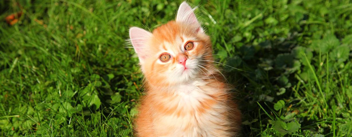 Pfotenstrecke: 10 rote Katzen