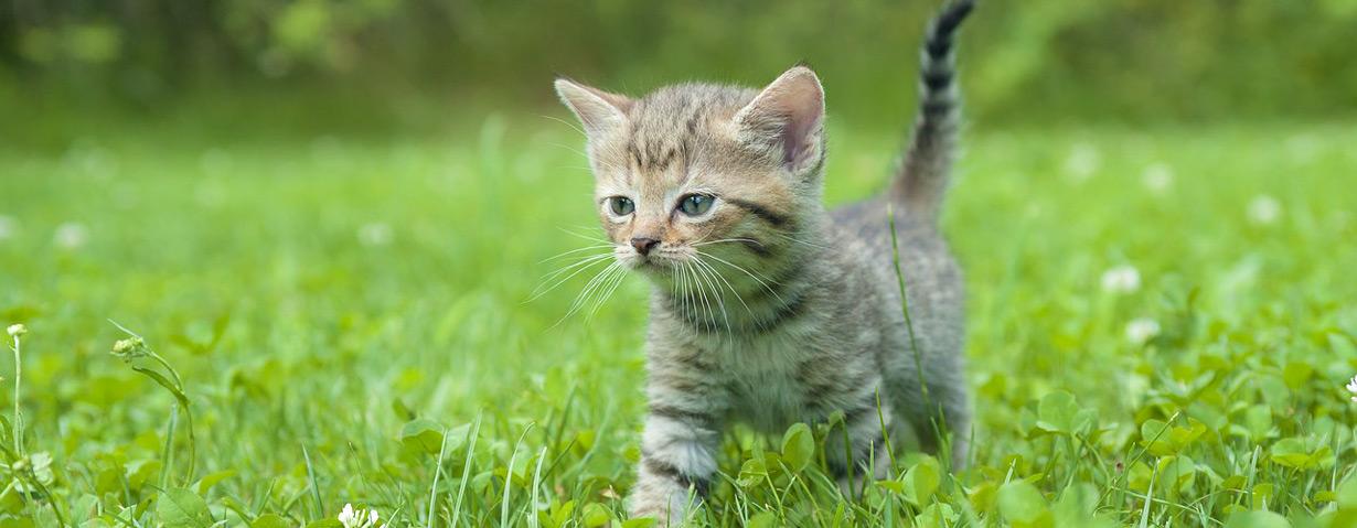 Katzennachwuchs – Die ersten Schritte ins Leben