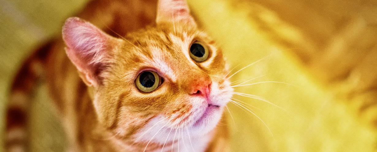 Optimale Hygiene für Samtpfoten – Das Katzenklo als Möbelstück