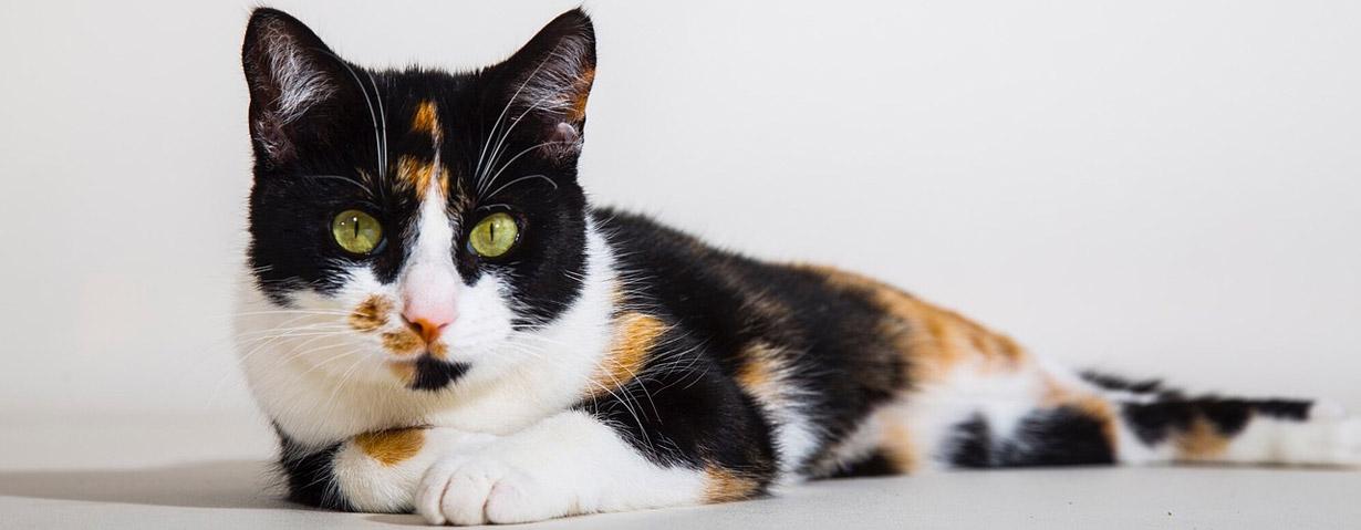 Fototassen mit Katzenmotiv – individuell und persönlich beschenken