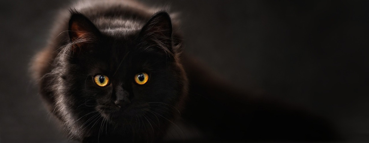 Pfotenstrecke: 10 Mal schwarzer Kater