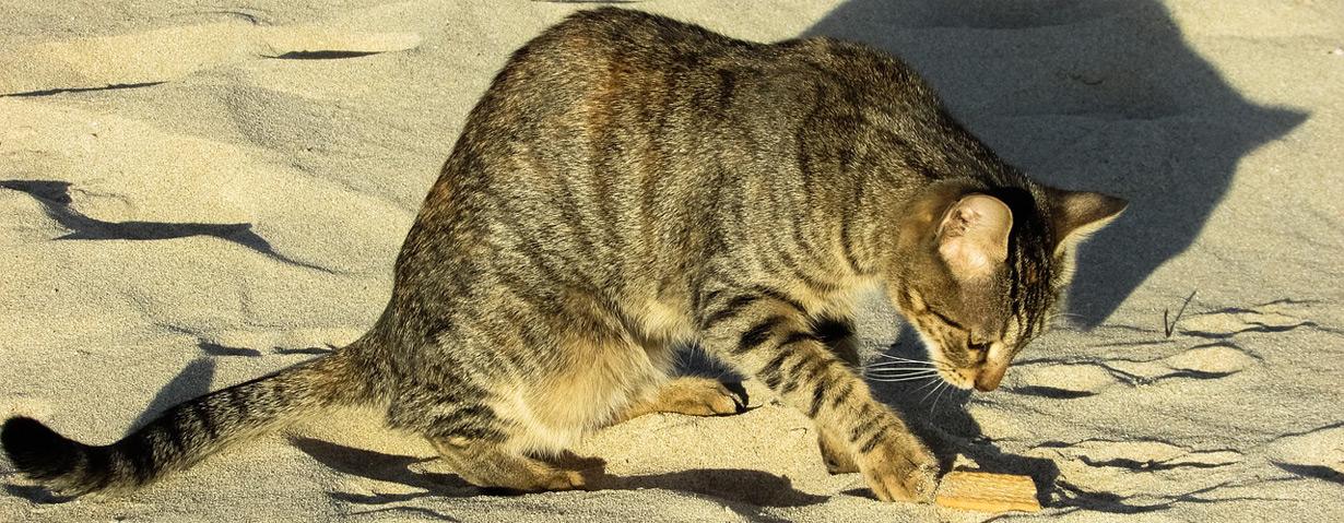 Verbreitung von Würmern verhindern: Pünktlich zur Sandkastensaison Katzen entwurmen