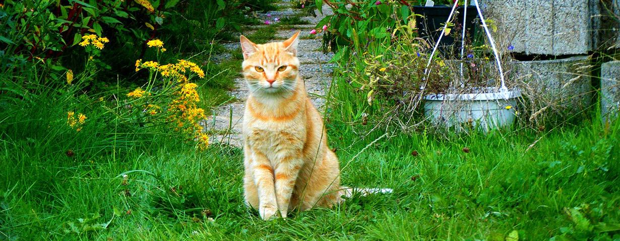 Katzen auf Freigang – PETA-Expertin gibt Tipps für ein sicheres Gartenvergnügen