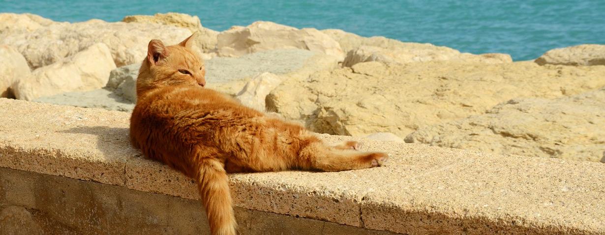 pixabay_cat-1863221_b.jpg