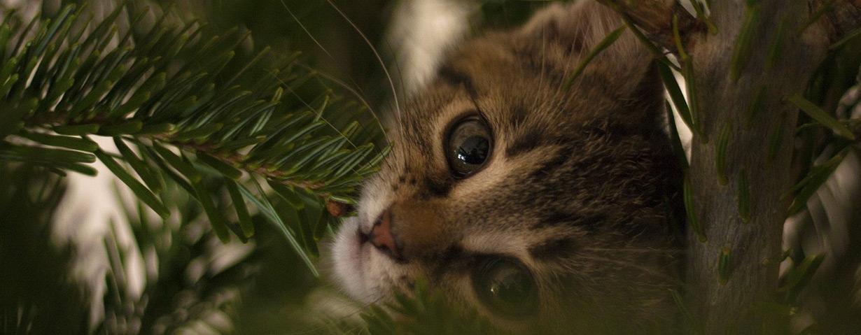 Geschenktipp zum Advent: 24 Katzengeschichten für den Advent
