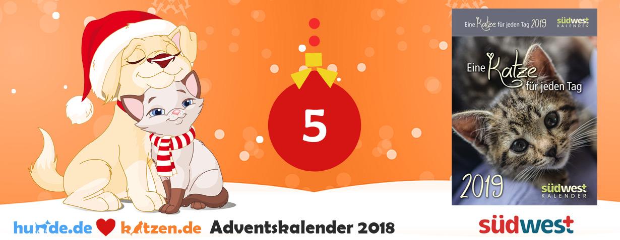 Gewinnspiel: Eine Katze für jeden Tag 2019