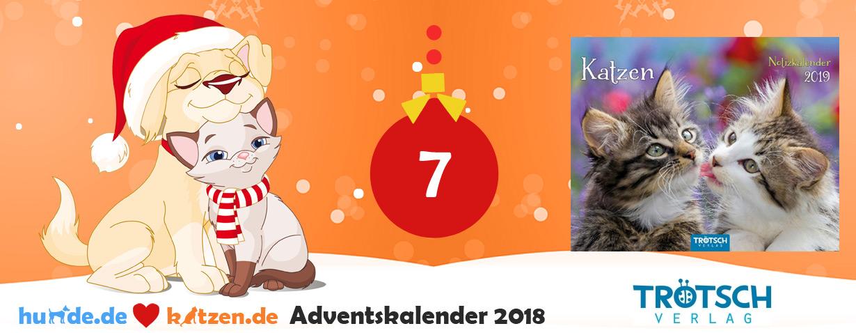 Gewinnspiel: Notizkalender Katzen 2019