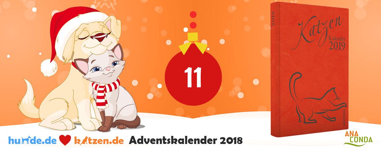 Gewinnspiel: Katzen Kalender 2019