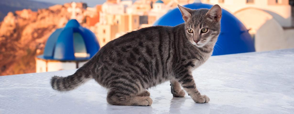 """Geschenktipp: Katzenkalender """"Santorini Cats 2019"""" verschenken und Katzen helfen"""