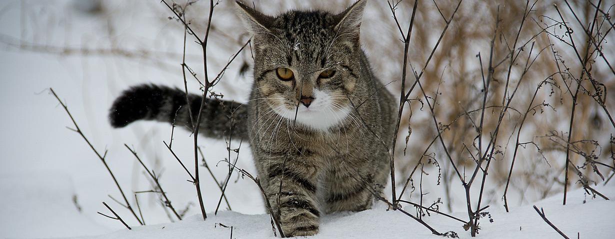 So überstehen Haus- und Streunerkatzen den Winter