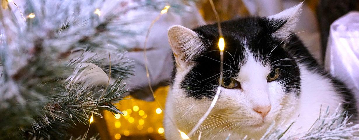 pixabay_christmas-3822094_b.jpg