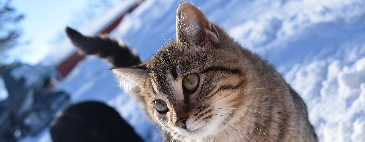 Tiere benötigen bei Frostwetter Schutz und Fürsorge – PETA gibt Tipps für die Versorgung von im Freien lebenden Tieren
