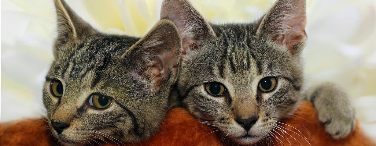 Falle im Mehrkatzenhaushalt
