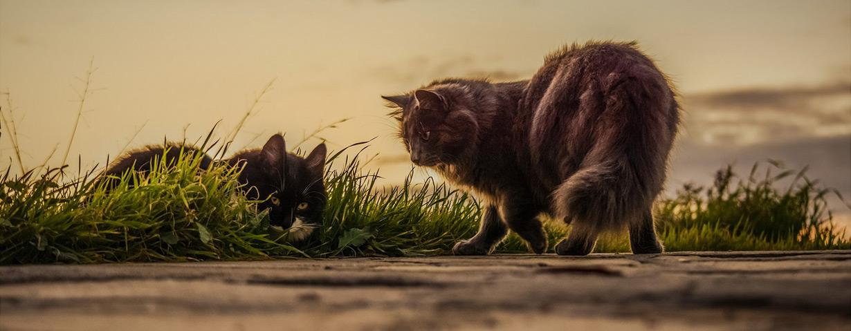 Flöhe bei Katzen bekämpfen