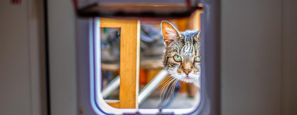 Katzenklappe vor unerwünschten Besuchern schützen